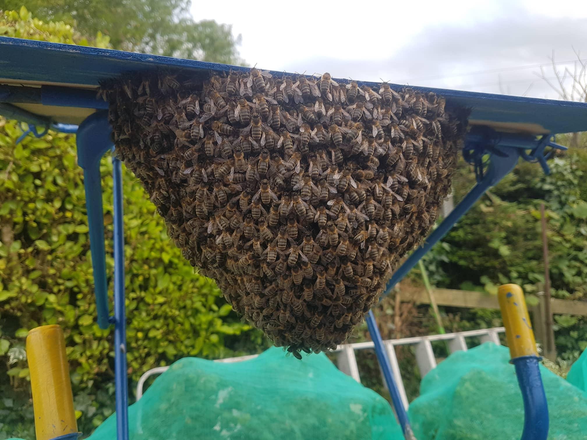 Bees! Help!