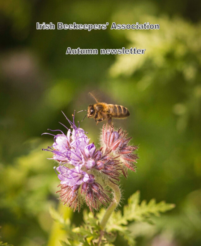 Photo: Elspeth Hall, Longford Beekeepers